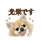 いいね~!チワワ(敬語編)(個別スタンプ:06)