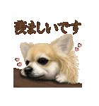 いいね~!チワワ(敬語編)(個別スタンプ:07)