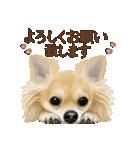 いいね~!チワワ(敬語編)(個別スタンプ:08)