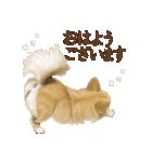 いいね~!チワワ(敬語編)(個別スタンプ:09)