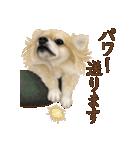 いいね~!チワワ(敬語編)(個別スタンプ:20)
