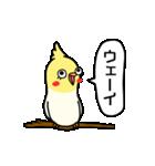 おしゃべり上手なインコ(個別スタンプ:03)
