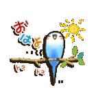 インコちゃんの夏(個別スタンプ:1)