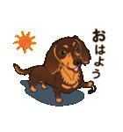 気軽にスタンプ ダックス(チョコタン)(個別スタンプ:01)