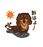 気軽にスタンプ ダックス(チョコタン)(個別スタンプ:02)