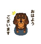 気軽にスタンプ ダックス(チョコタン)(個別スタンプ:03)