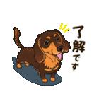 気軽にスタンプ ダックス(チョコタン)(個別スタンプ:05)