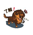 気軽にスタンプ ダックス(チョコタン)(個別スタンプ:06)