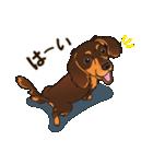 気軽にスタンプ ダックス(チョコタン)(個別スタンプ:07)