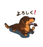 気軽にスタンプ ダックス(チョコタン)(個別スタンプ:09)