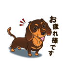 気軽にスタンプ ダックス(チョコタン)(個別スタンプ:14)