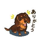 気軽にスタンプ ダックス(チョコタン)(個別スタンプ:15)