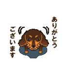 気軽にスタンプ ダックス(チョコタン)(個別スタンプ:16)