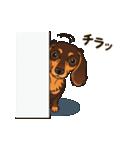 気軽にスタンプ ダックス(チョコタン)(個別スタンプ:17)