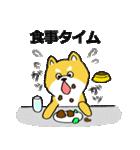 「まめ田ちゃめ助」柴犬スタンプ(個別スタンプ:10)