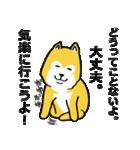 「まめ田ちゃめ助」柴犬スタンプ(個別スタンプ:14)