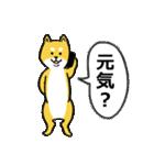 「まめ田ちゃめ助」柴犬スタンプ(個別スタンプ:35)