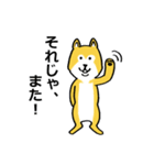 「まめ田ちゃめ助」柴犬スタンプ(個別スタンプ:36)