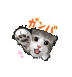 もふ猫もふう…動く!(個別スタンプ:05)