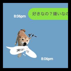 リアルな柴犬スタンプ(其の陸)
