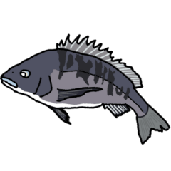 チヌ(クロダイ)フカセ釣り師のスタンプ
