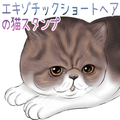 エキゾチックショートヘアの猫スタンプ