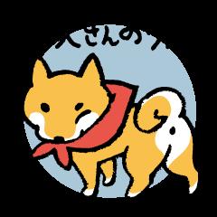 柴犬さんのツボ vol.3 おじさま&おくさま編