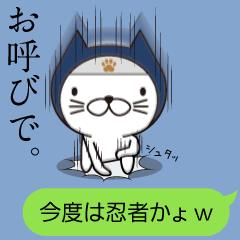 忍者ネコ。