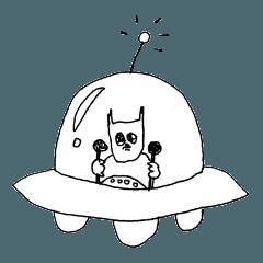 エキゾチックショートヘアー3