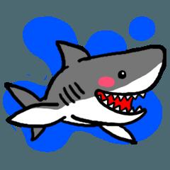 サメ、怖くない。