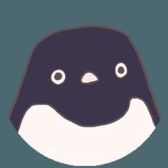 ぎっしりアデリーペンギン