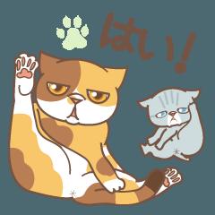 ネコでごめん〜おどけるブサ猫 デカ文字〜