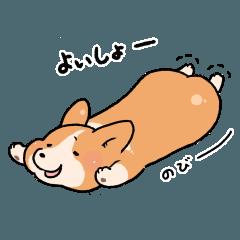 コーギー犬 ○