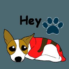 MIX犬サニーのワングリッシュ