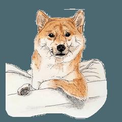 [LINEスタンプ] 柴犬のここが好き8