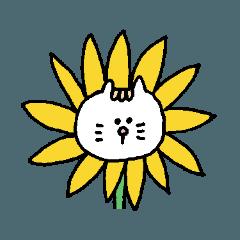 しろいきてぃ(夏)