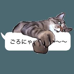 猫田風太郎、ぼやき。