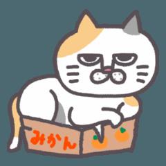 [LINEスタンプ] 平和な猫の幸せな日々
