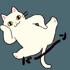 動く猫のしらたま