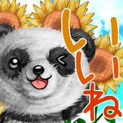 モフ☆パンダの夏