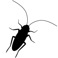 カサカサ動くゴキブリ達