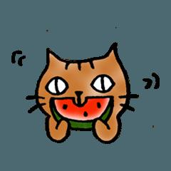 猫のトラタ7 夏