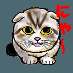 リアル猫 1