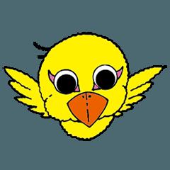 小鳥のピノ