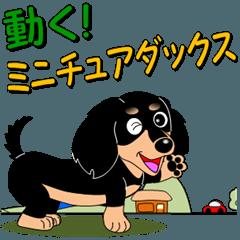 動く!ミニチュアダックス「敬語」