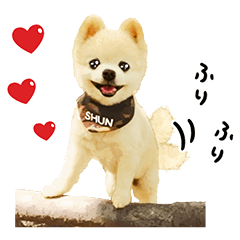 [LINEスタンプ] 犬の俊介くん (1)
