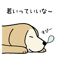 ゴールデンドッグ3(老犬編)