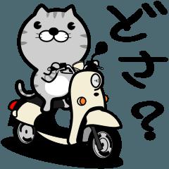 [LINEスタンプ] 津軽弁のトラねこ