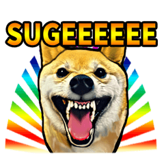 リアル柴犬☆柴犬祭り