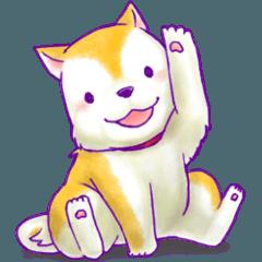 ほんわかアニマルzoo~柴犬編~
